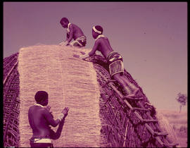 Zulu women building traditional hut.