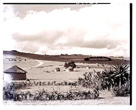 Transkei, 1952. Native huts.