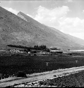 De Doorns, 1930. Railway line through vineyard in Hex River valley.