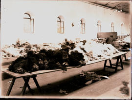 Port Elizabeth. Ostrich feathers on display in the Feather Market hall.