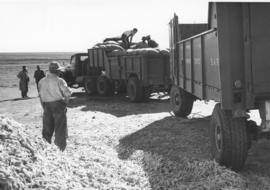 Brandfort district, 1957. Loading mealies on SAR truck with trailer.