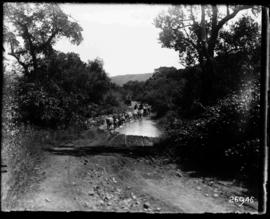 Louis Trichardt district. Mule wagon crossing drift at Wyliespoort in the Soutpansberg.