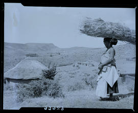 Transkei, 1954. Woman with firewood on head.