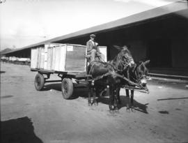 Wagon with wooden boxes being drawn by two horses.