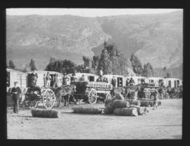 De Doorns. Loading fruit onto horse-drawn wagons in the Hex River valley.