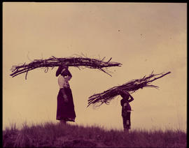 Melmoth district. Zulu woman and child fetching firewood at Nkandla.