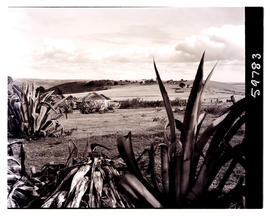 Transkei, 1952. Kraal in the distance.