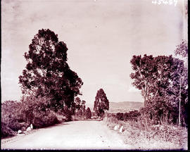"""Nelspruit district, 1938. Approach road."""