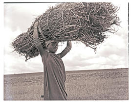Transkei, 1952. Xhosa girl with firewood on head.