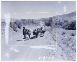 """Knysna district, 1945. Ox wagon underway with African family."""