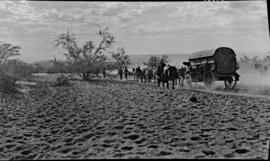 South-West Africa. Wagon with span of mules on trek over sandy terrain.