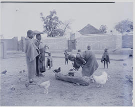 Pretoria district, 1952. Ndebele women and chickens around pot with kraal behind.