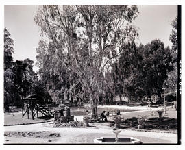 """Aliwal North, 1938. Gardens at hot springs resort."""