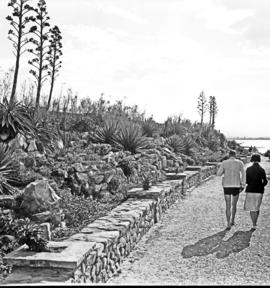 Port Elizabeth, 1934. Rock garden near Hobie Beach