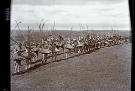 Transkei, 1932. Double line of Abakweta dancers.
