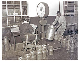 """Aliwal North, 1938. Weighing milk churns."""
