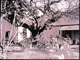 """Nelspruit, 1926. House and garden."""