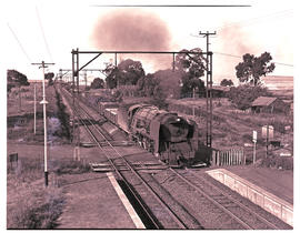 Springs district, 1953. Goods train hauled by SAR Class 15F near Geduld.