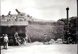 Cape Town district. Threshing with stationary steam engine, huge pile of hay, large number of bag...
