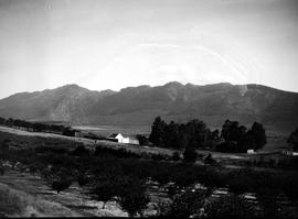 Tulbagh district, 1928. Fruit orchard and homestead in the distance.