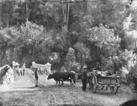 Cape Colony. Scots cart with four oxen at bridge in mountain pass.