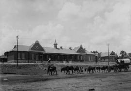 Johannesburg. Roodepoort station building with ox wagon in the foreground.