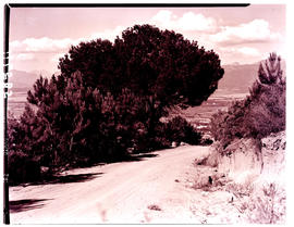 Paarl district, 1939. Mountain drive.