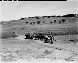 Transkei, 1940. Wagon and team at Tsolo native agricultural school.