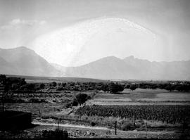 Tulbagh district, 1928. Fruit orchard and vineyard.
