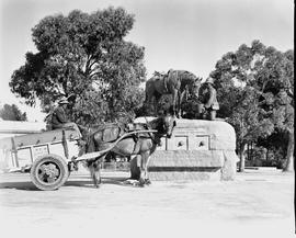 Port Elizabeth, 1943. Municipal cleansing cart at horse memorial.