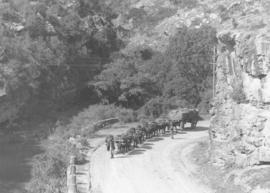 Grahamstown district, 1939. Ox wagon with load in mountain pass.
