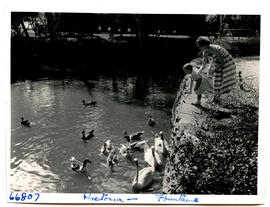 Pretoria, 1957. Feeding water birds at the Fountains.