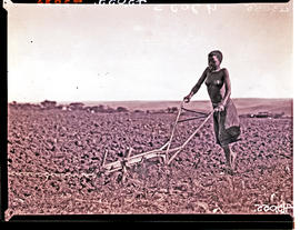King William's Town district, 1935. Young Fingo woman guiding plough.