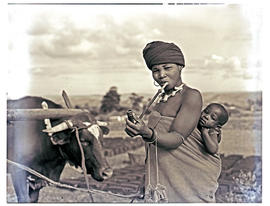 Transkei, 1952. Woman smoking pipe with baby and ox.