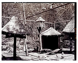 """Aliwal North, 1938. Aviary at hot springs resort."""