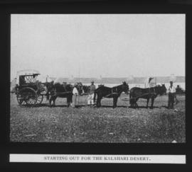 Kalahari. Cart and six mules.