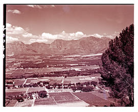 Paarl district, 1939. Vineyards.