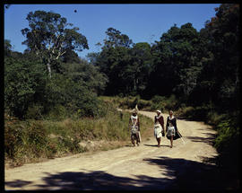 Melmoth district, 1961. Walking down country road in Nkandla forest.