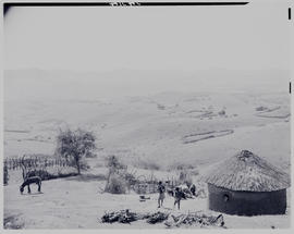 Umtata district, 1949. Traditional hut and surrounds.